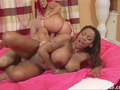 ExGhettoGf: Two chubby black babes fuck a pallid guy